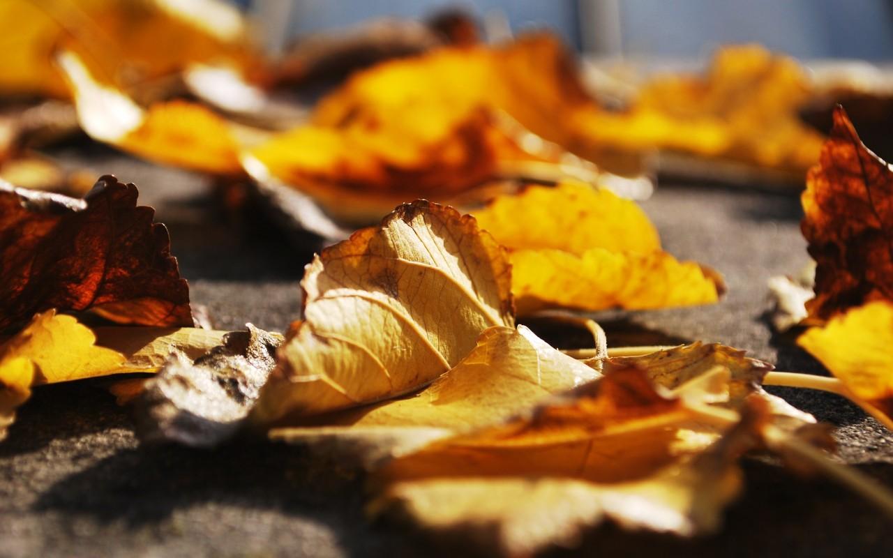 leaves-block-drains